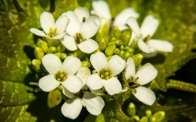 Makrofotografie im botanischen Garten